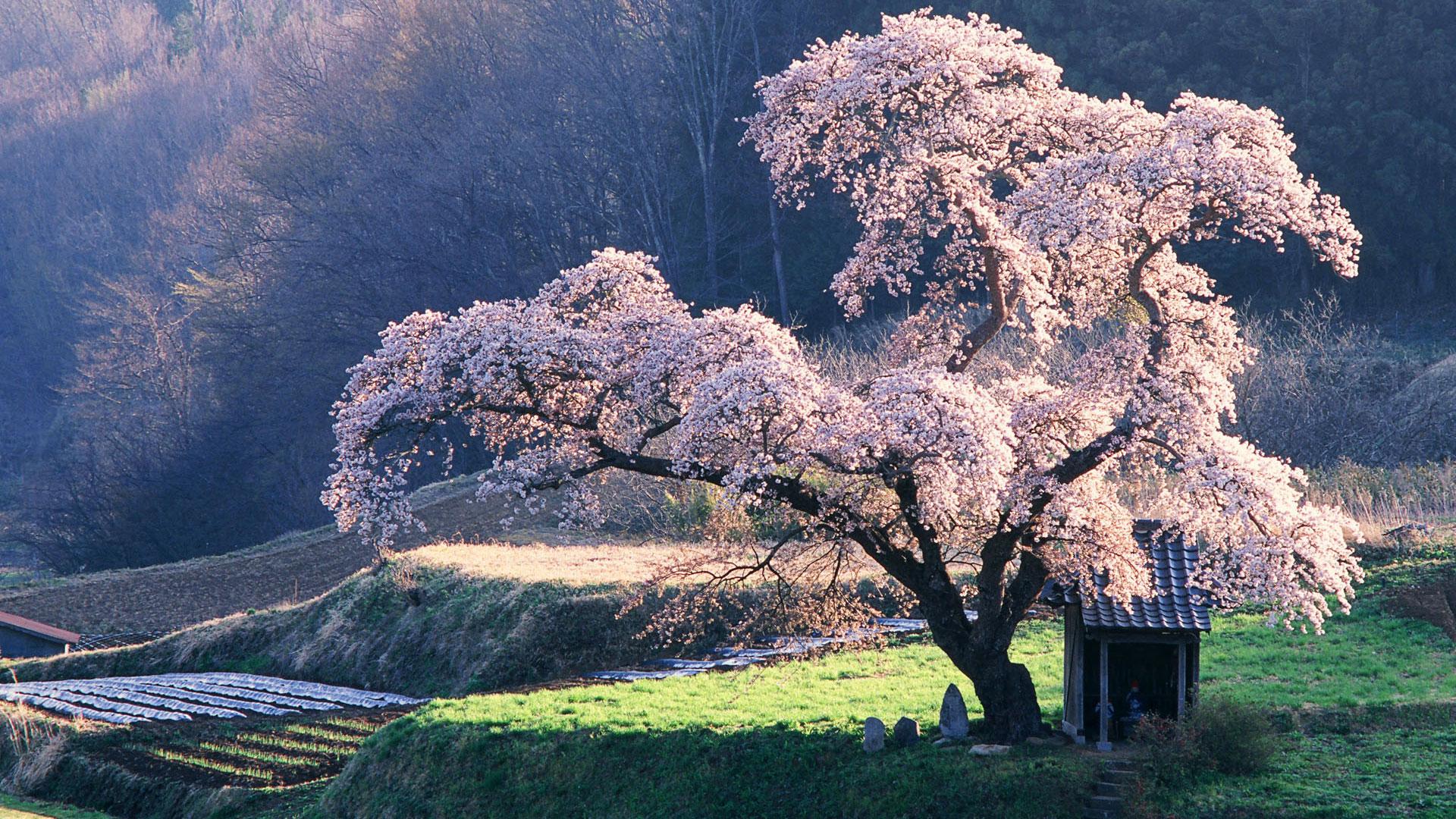 ทัวร์ญี่ปุ่น ท่องเที่ยวญี่ปุ่น โปรโมชั่นทัวร์ญี่ปุ่น