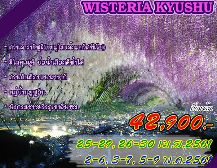 WISTERIA KYUSHU