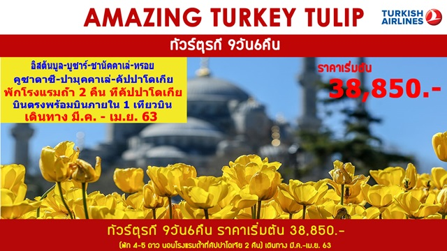 AMAZING TURKEY TULIP